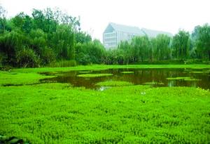四川美术学院虎溪校区(国际公共