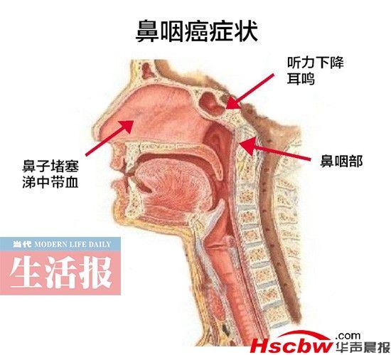 鼻子内部结构图解剖