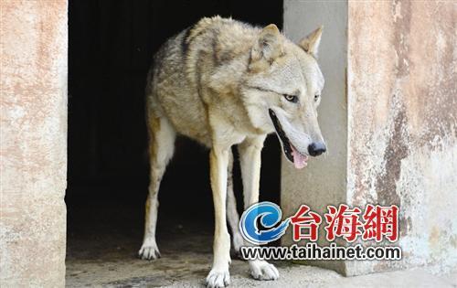 国家二级保护动物