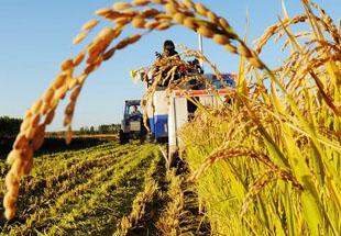 中央农村工作会议有望锁定两大主题