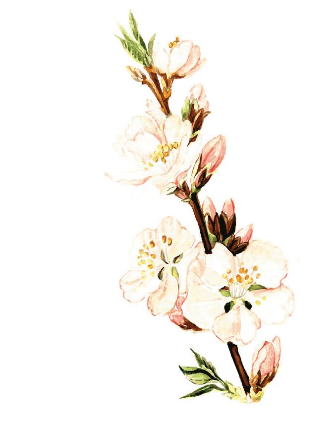 刺绣图案简单梅花