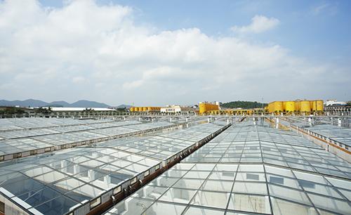 面积超过60万平方米的海天酱油阳光大晒场