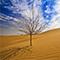 第四届库布其国际沙漠论坛